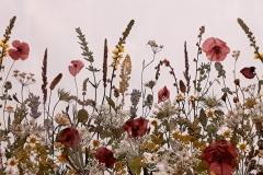 Dried-Flower-Landscape