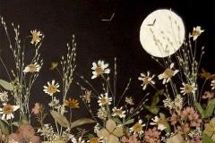 Moon-and-Daisies